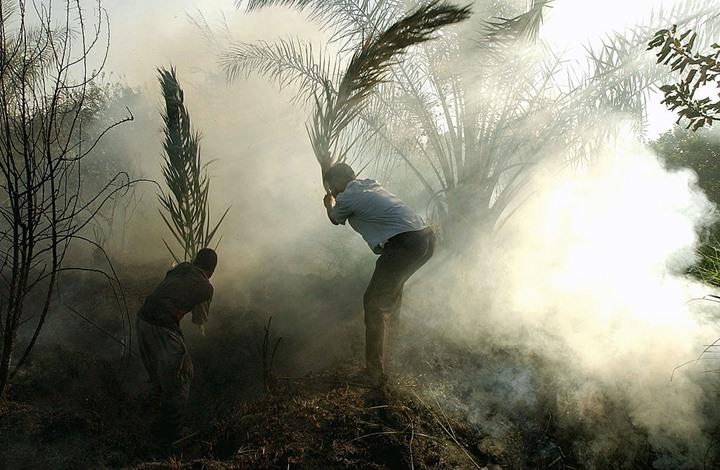 نائب عراقي يتهم الإمارات والسعودية والأردن بالتورط في إحراق محاصيل بلاده